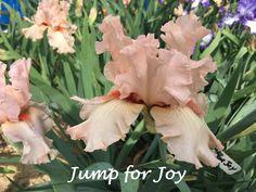 Jump for Joy Iris...Love the spoons!