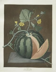 Fruit Illustrations taken from 'Pomona Britannica' by George Brookshaw. Published 1812.  Images and text courtesy NYPL Digital Collection.