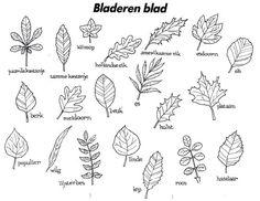 Afbeeldingsresultaat voor bomen herkennen aan blad