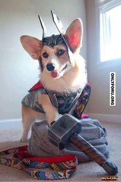 Thor or  Thorgi! - #OnlyForU, #funny, #lol, #fun, #humor, #rofl, #troll, #comics, #meme, #gags, #new, #lol pics, #Funny pics,