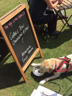 Meet Deeva. She attended the Guide Dogs Summer Fun Day at Shipley Park in July 2015 and enjoyed a doggy cupcake and drink at The Very Little Coffee Co