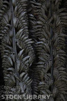 Dried Ponga Leaves NZ FLora