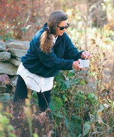 How to harvest seeds -- this lady knows.  Harvesting on a brisk autumn day is like a final celebration for the gardener. A glorious past season promises a bountiful new garden.
