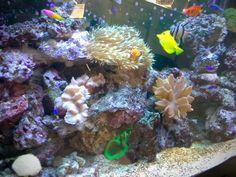 Aquarium eau de mer installé et entretenu par #Aquarium Services France #fishtank #aquariumeaudemer