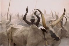 Africa |  Dinka tribesman amoung the cattle.  One of the many magnificent photos out of Angela Beckwith and Carol Fischer's book Dinka: Legendary Cattle Keepers of Sudan.