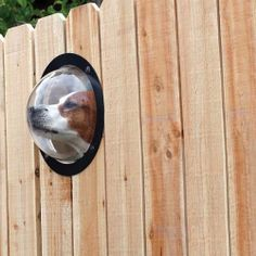 Pet Peek allows your dog to see what's on the other side of that pesky fence without digging a hole under it.