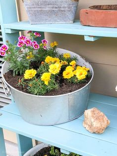 Portulaca - easy flowers to grow in containers or hanging baskets