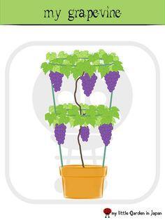 Grape vine in a container.