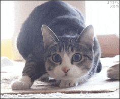 Paranoiaguda - GIFs - Melhor GIF da semana - Um gato muito seduzente