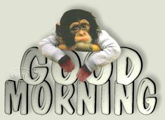 Good Morning - Sad Monkey-wg0180527
