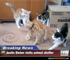 Justin Bieber visita un centro de animales. (SP 3 volunteer chapter, SP 2 errands around town chapter)