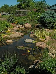 My friends Doug Jimerson and Karen Weir-Jimerson have one of the best ponds in their garden. This is from Aquascape. I want one in my backyard.