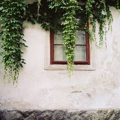 Ivy On The Window Fine Art Photography by siobhanphotography, $38.00