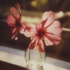 floralls — (via Untitled | Flickr - Photo Sharing!)