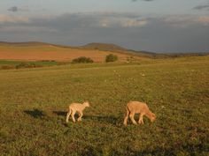 Farm, Bonnievale, South Africa