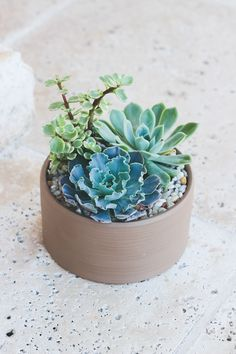 ideas small succulent arrangements pots for 2019 Felt Succulents, Purple Succulents, Small Succulents, Succulents Garden, Succulent Wedding Centerpieces, Succulent Arrangements, Wedding Arrangements, Succulent Display, Succulent Planter Diy