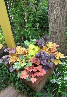 Container gardening, look up this gardening pin idea reference 2322579414 to grow plants in a pot. Shade Garden Plants, Garden Shrubs, Garden Planters, Container Plants, Container Gardening, Small Flowering Plants, Heuchera, Tropical Garden, Outdoor Plants