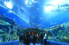 Chimelong Ocean Kingdom: Das größte Aquarium der Welt
