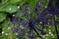 Пшик-пшик краской и побуревшие соцветия преобразились / Pelageya