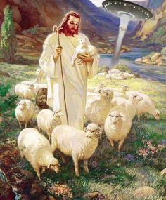 Jesus lost a lamb