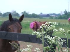 Minimize your horse's risk of ingesting a deadly plant by identifying and removing harmful species