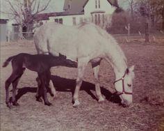 Back yard/paddock Horses, Animals, Animaux, Horse, Animal, Animales, Animais