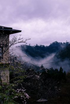 This is a foggy valley in Yoshino, Japan. We went to visit during the sakura season.