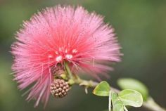 11 of the most unusual flowers on the planet  - housebeautiful.co.uk