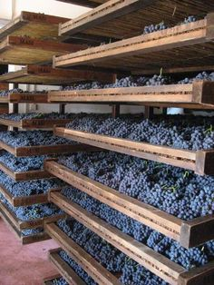 Corvina grapes dry in wooden trays Amarone Wine, Wine Vine, Wooden Trays, Famous Wines, Regions Of Italy, Cata, Wineries, Wine Cellar, Wine Tasting