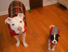 Keep your Pitties (and all your fur-babies this winter) warm!!!!