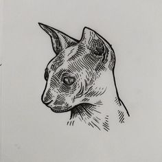 Outro gato. #inkdrawing #ink #illustration  #darkarts #darkartists #blackwork #tattoo #tattooflash #linework #lineink #lineart #cat #sphynx #cattattoo #catlover
