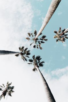 Palm tree, wallpaper, hd wallpapers and summer wallpapers HD photo by Wil Stewart ( on Unsplash Collage Mural, Photo Wall Collage, Picture Wall, Photo Collages, Summer Wallpaper, Tree Wallpaper, Wallpaper Backgrounds, Phone Backgrounds, Iphone Wallpaper Paint