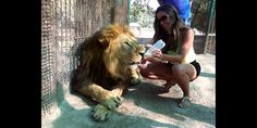 Young woman feeding a male lion (© Zoo Lujan Baires via Facebook)