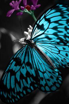 Color Splash Butterfly by EvpDragon345.deviantart.com on @DeviantArt