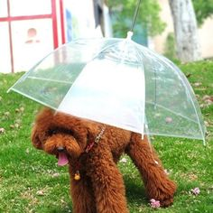 LESYPET Pet Umbrella, Dog Umbrella with Leash Folding Assembled Puppy Doggy Umbrella (Transparent) Gifts For Pet Lovers, Dog Lovers, Pet Dogs, Dogs And Puppies, Dog Umbrella, My Champion, 21st Gifts, Dog Coats, Dog Leash