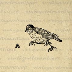 Digital Graphic Bird Chasing Worm Download by VintageRetroAntique