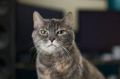 CATS! I don't think Big Puddy trusts me.