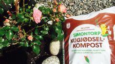 Ti tips til vakre roser Water Bottle, Tips, Food, Gardening, Compost, Essen, Lawn And Garden, Water Bottles, Meals