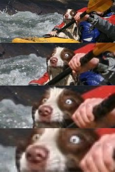 Animals Who Have Made A Huge Mistake: This dog on a kayak.