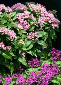 Neil Sperry: Colorful summer blooms that can take the heat