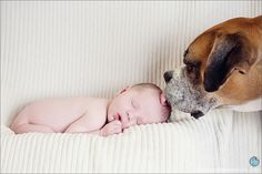 Love it!!!  Baby with dog, look how gentle the boxer is with the new baby! So sweet! Boxers have such great character.
