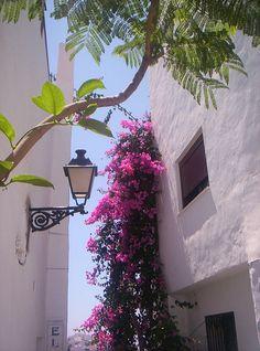 Frigiliana, Málaga, Spain. We ate in a garden just under these flowers.