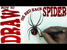 How to Draw the Red Back Spider (beginner)- Spoken Tutorial - YouTube
