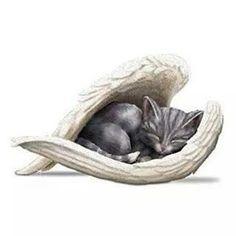 =^..^=   Sleep Well, Little Angel.