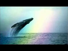 Whales & Dolphins ~ Natural Sounds. It is proven that natural sound of delphins and whales lullabyes to have an ennormous benefit on humain embrion...frequency,energy and...:)