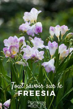 Dream Garden, Home And Garden, Decoration Plante, Plantar, Plantation, Horticulture, Garden Plants, Wedding Flowers, Ainsi