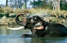 Elephant Safari. India Elefun is devoted to creating a safe and natural environment for elephants.