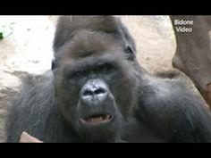 Zoo Leipzig - Gorillas / Monkeys