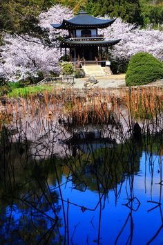 Cherry blossoms and Himuro pond at Kaju-ji temple, Kyoto 京都のサクラの穴場の勧修寺の観音堂と氷室池と満開の見事な桜