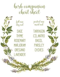 Herbs Gardening herb companion cheat sheet - mint alone, spreads out! - Are you ready for spring? I'm getting ready with this fun herb garden and printable herb companion cheat sheet. Organic Gardening, Gardening Tips, Vegetable Gardening, Gardening Quotes, Urban Gardening, Kitchen Gardening, Gardening Books, Arizona Gardening, Herb Garden In Kitchen